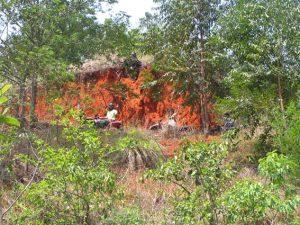 PresFun2008 swaziland 124-0064